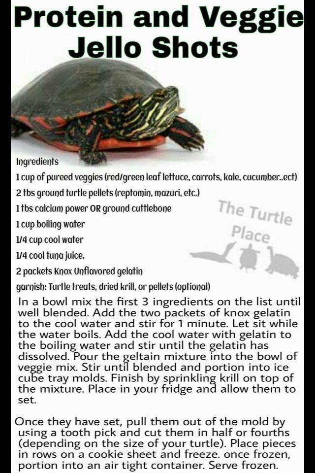 25 best Turtle enclosure images on Pinterest | Turtles, Turtle pond ...