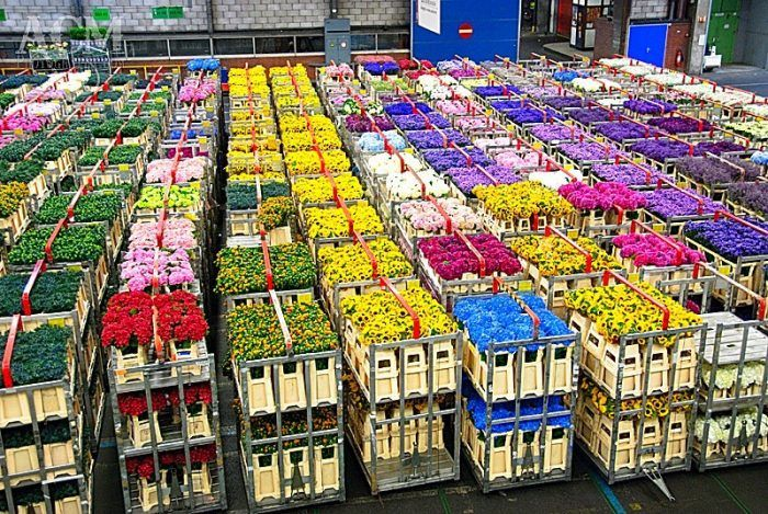 Цветы по оптовым ценам в санкт-петербург