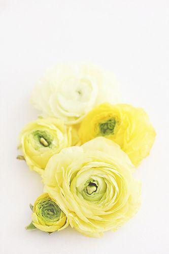 yellow flowers www.bibleforfashion.com/blog #bibleforfashion
