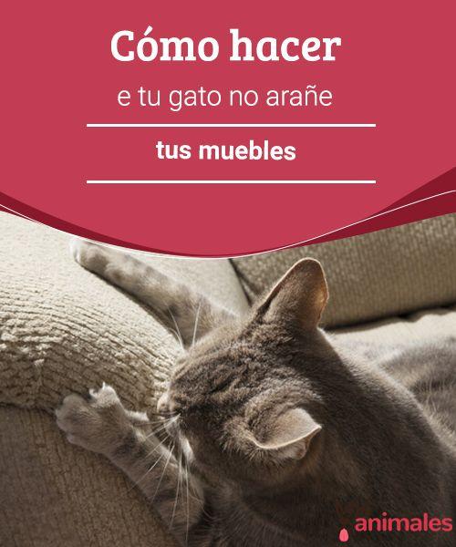 Cómo hacer que tu gato no arañe tus muebles  Es normal que un gato arañe los muebles. Todos lo hacen. No obstante, hay forma de evitarlo. Te damos unos tips para que lo consigas. #arañar #muebles #tips #adiestramiento