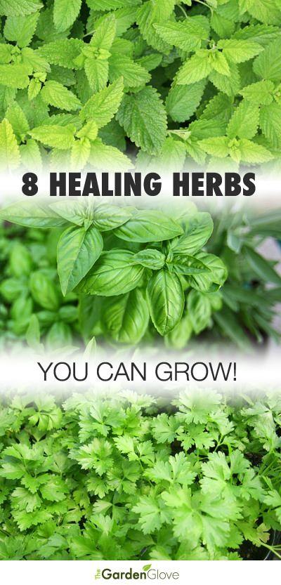 Herbs f