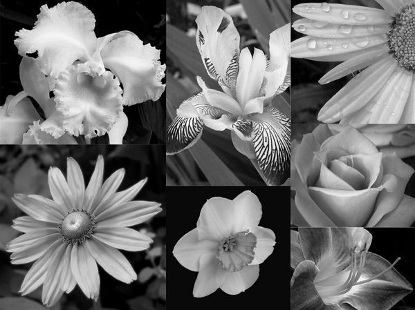 Flowers Collage Sc Life Pinterest Collage Flowers And White