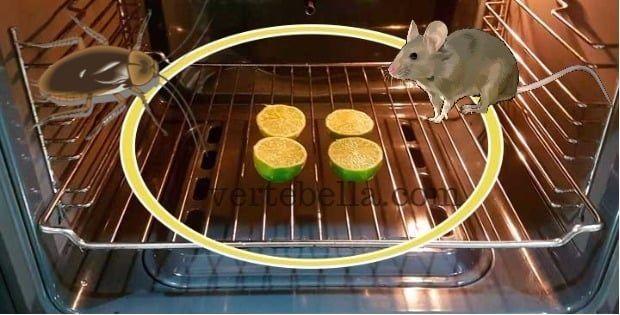 Técnica de limones en el horno para ahuyentar cucarachas y ratas. A veces por mas que nos matemos limpiando, las plagas como ratas y sobre todo cucarachas