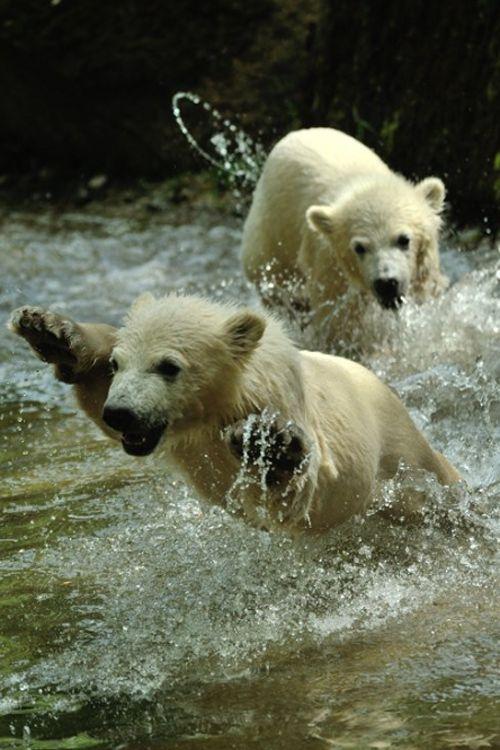 earthandanimals: Having water fun (by Marc Haegeman)