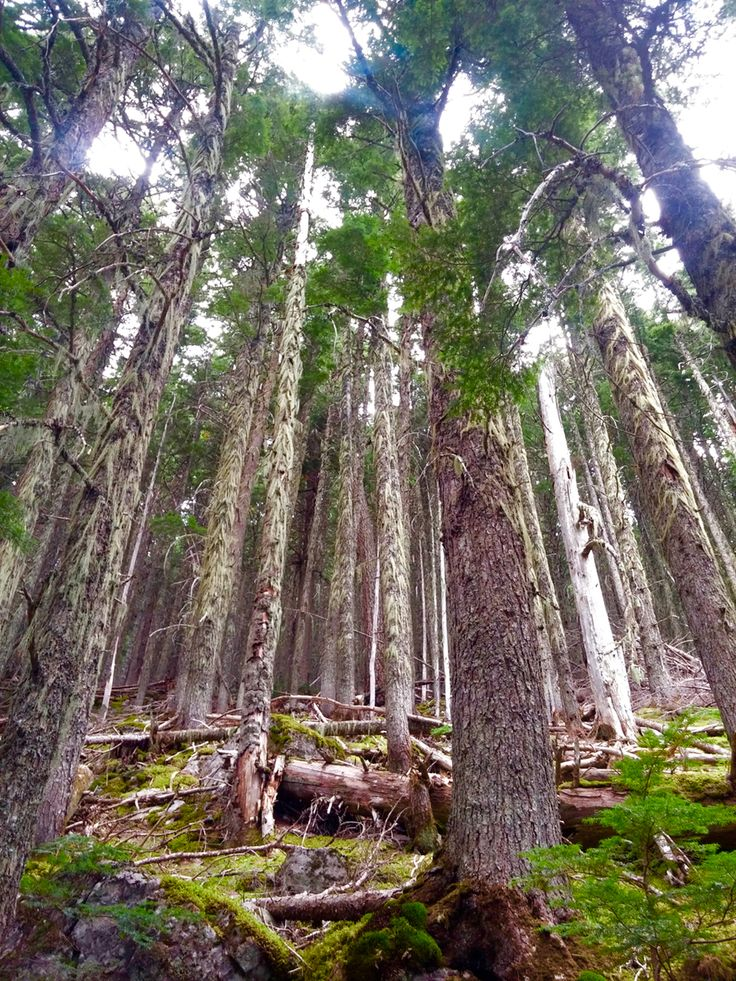 The Hairy Forest of Glacier National Park - A Sight from a Fairytale More photos in the article!