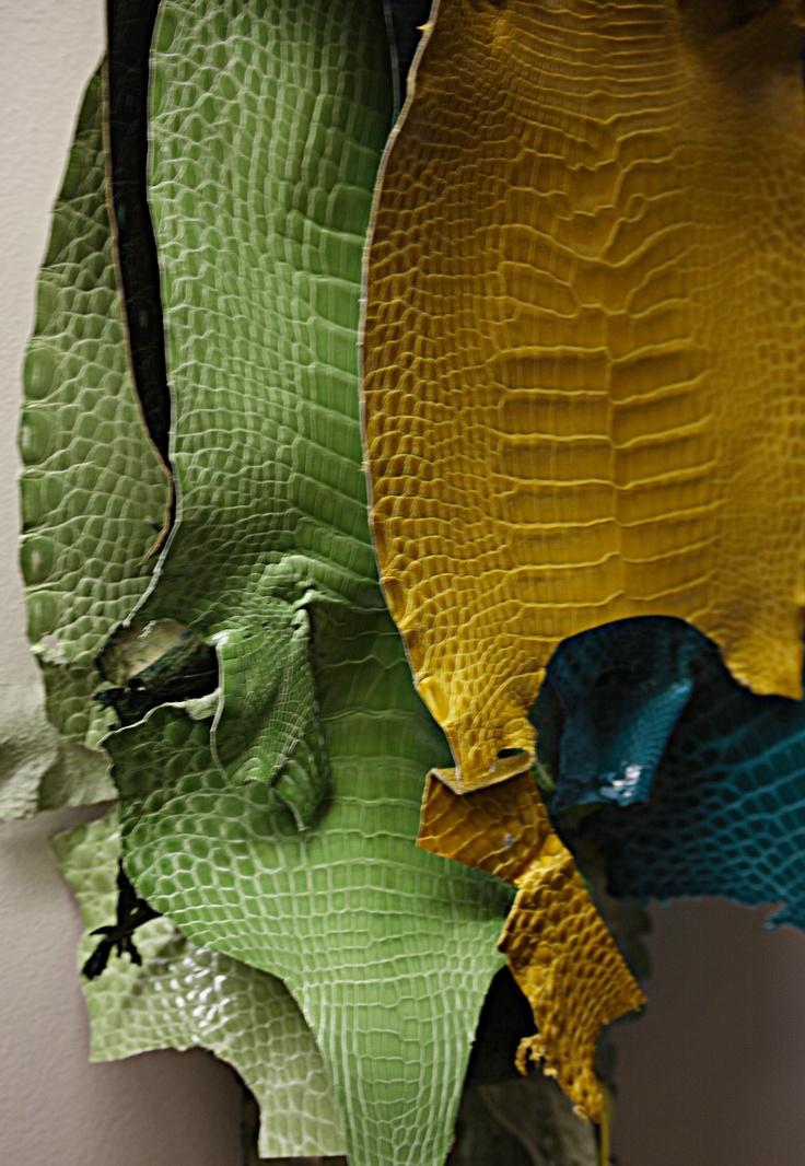 Genuine Nile Crocodile skins