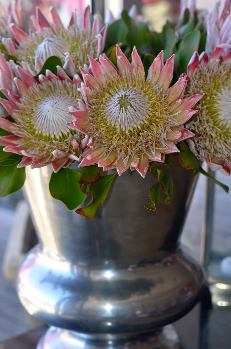 King Protea Suid Afrika - would love this arrangement in my home!
