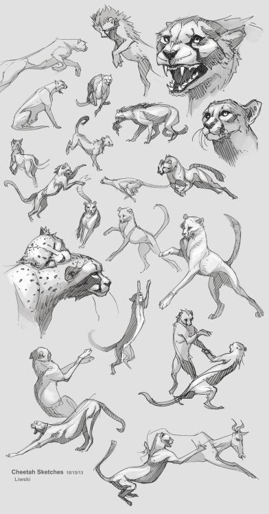 © zebrafeets-art — Animal studies, felines