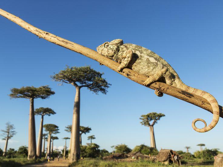 Pourquoi la faune et la flore de Madagascar sont-elles si exceptionnelles ? Et que fait-on pour protéger ce trésor ?