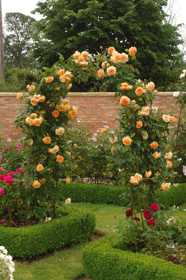 94 best Rose garden images on Pinterest Flowers Gardening and