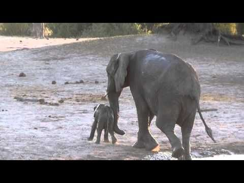 Baby Elephant Doesn't Want to Leave His Bath - Neatorama