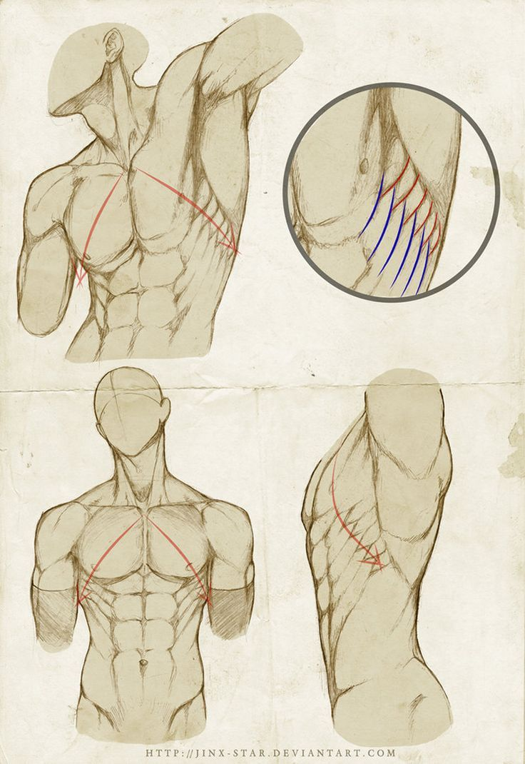 """Placement of Serratus by ~jinx-star  Anatomy©2012-2013 ~jinx-star re:  Burne Hogarth's method """" To correctly place the Serratus Anterior, imagine a line starting at the pit of the neck traversing the nipple 45 degree down"""" join us http://pinterest.com/koztar"""