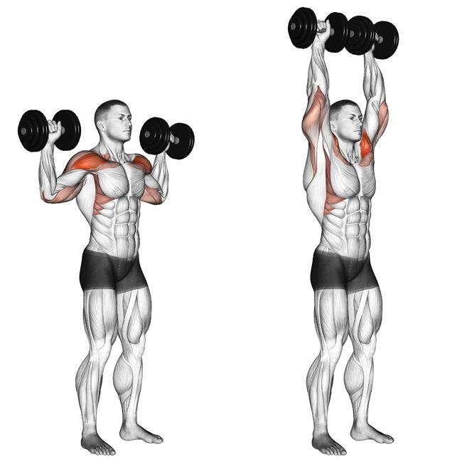Beaufort Fitness Shoulder Press Exercice Musculation Epaule