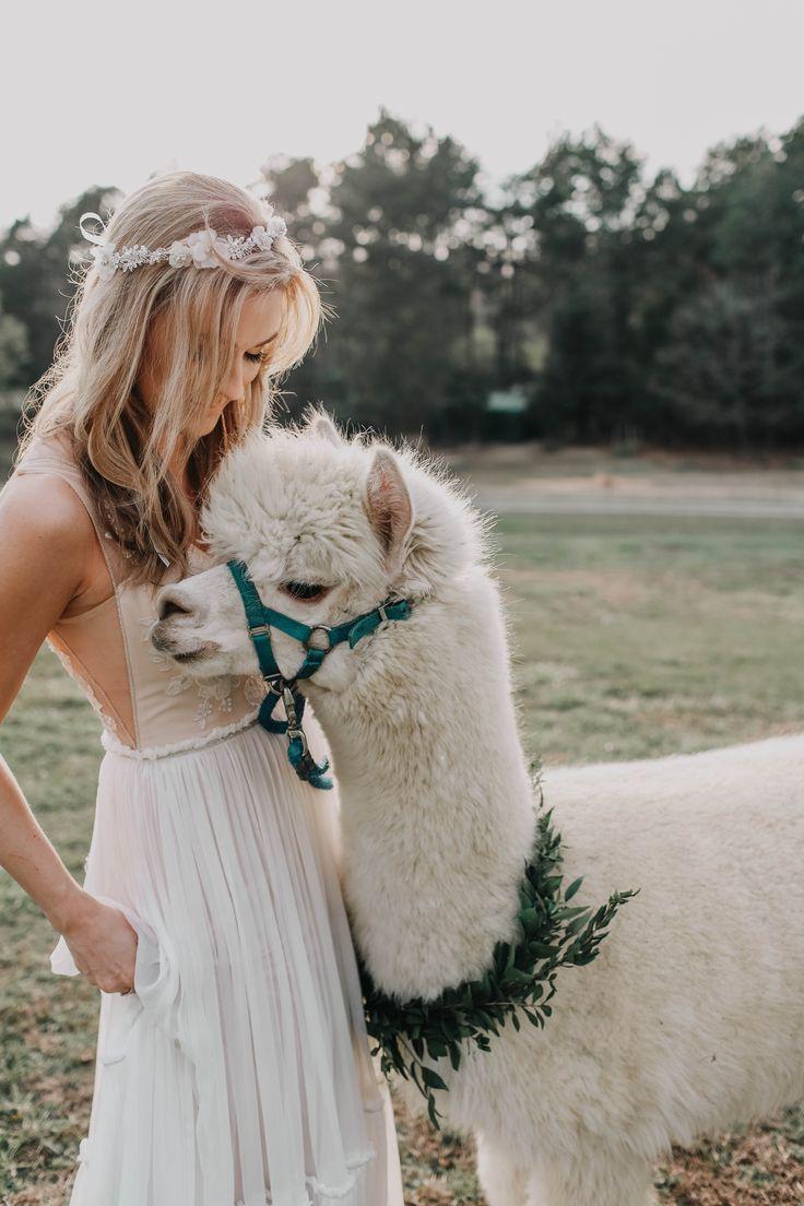 Alpaka Love Scheunenhochzeit Inspiration Lieschen Heiratet