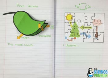 Pics of my science notebook for our plants unit