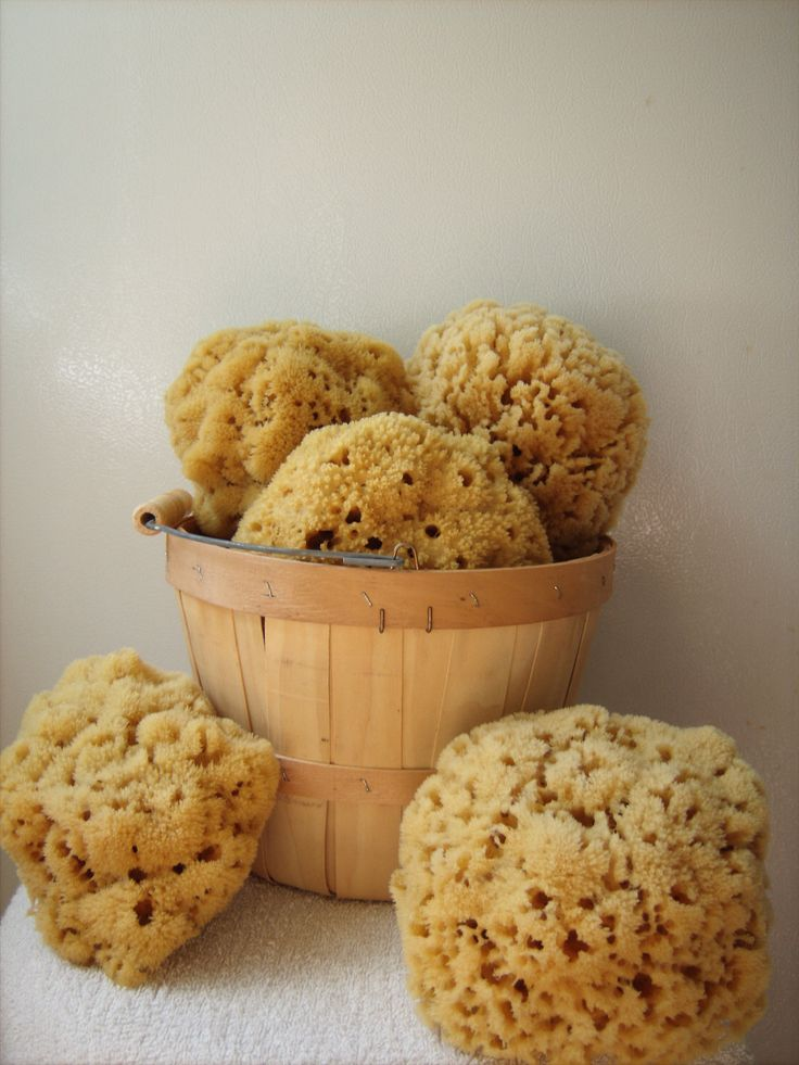 Natural sponges for bathing are great for washing hair and soft on baby's skin.