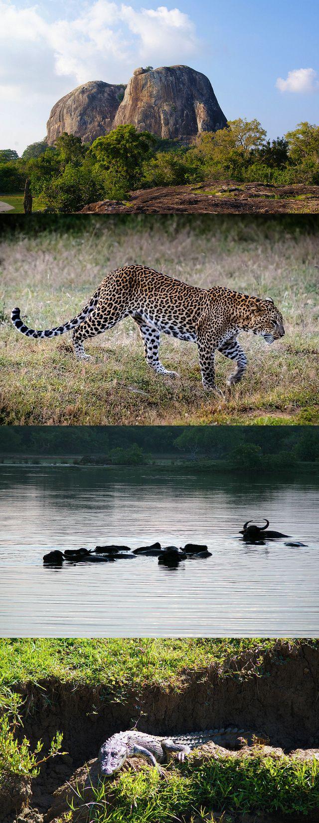 Yala National Park, Sri Lanka #SriLanka #YalaNationalPark #Leopard