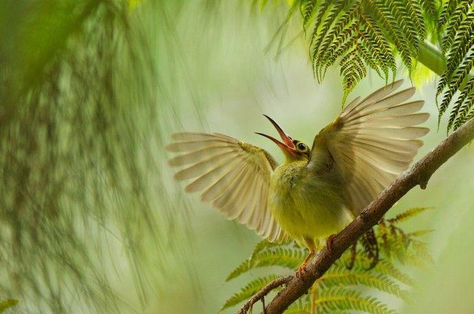 Удивительные фотографии птиц | Colors.life
