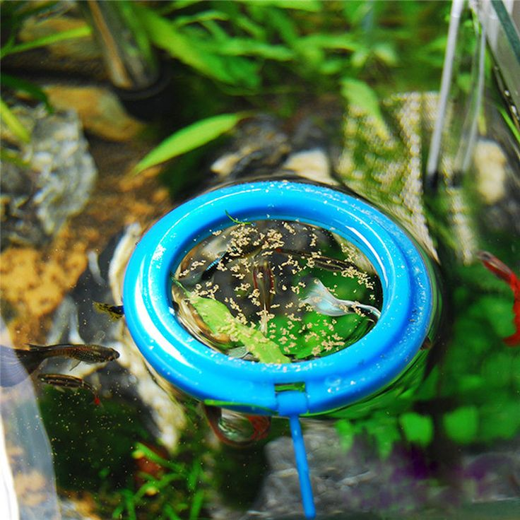 Best 25 Round fish tank ideas on Pinterest Decorating