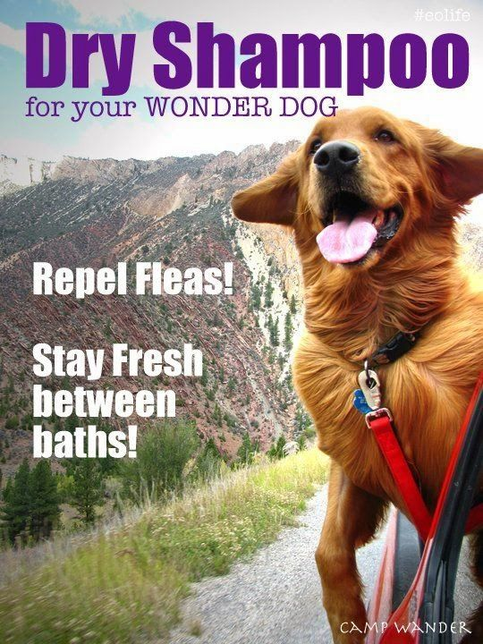 DIY And Crafts: EASY! Dry Shampoo for Dogs! Clean, Fresh & Flea Free!