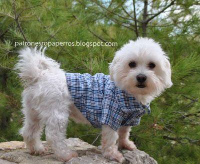 Patrones de camisa para perro