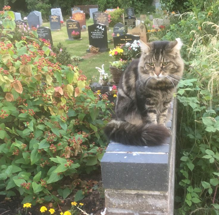Overgrown memorial bed at the churchyard, and friend.