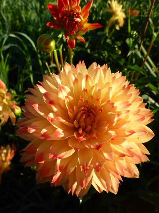 Nordic Sublime Flores Pinterest Flores Exotico And Maravillas