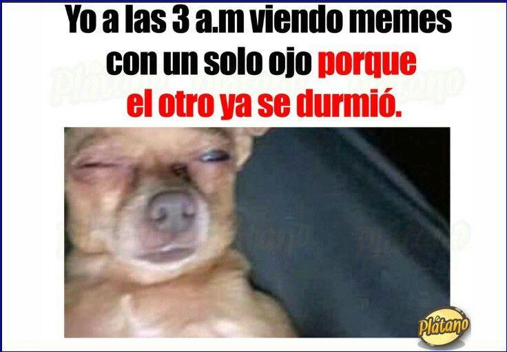 Yo Sigo Viendo A Mi Hermana Como Si Todavia Tuviera 15 Animal Memes Funny Spanish Memes Dog Memes