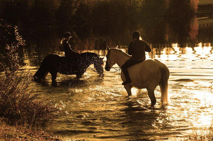 Horseback riding in the midnight sun