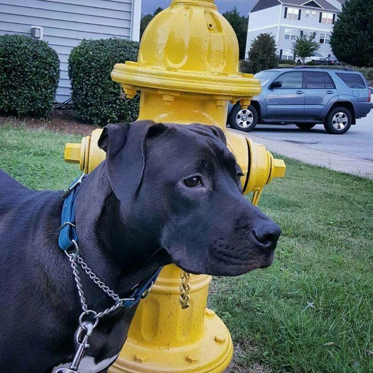 dogdoggoose on Etsy - Shop Updates
