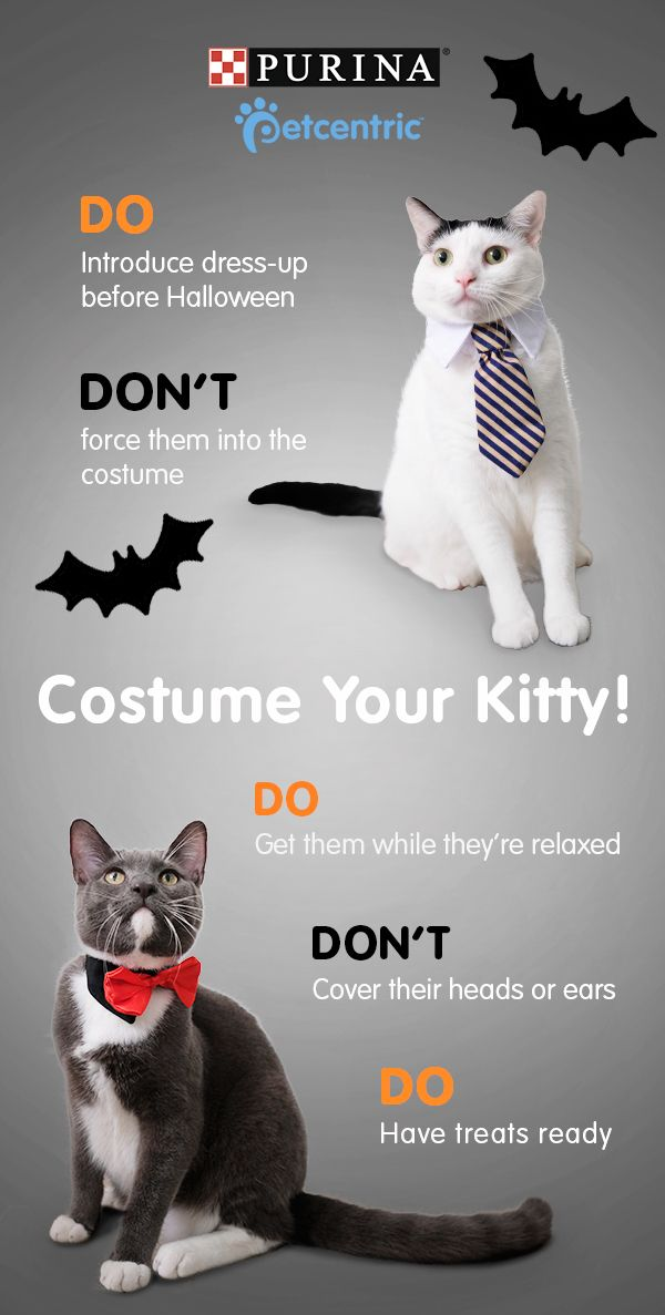 Sign up for our newsletter and get your paws on content so cute, it's scary! Want to dress-up your scaredy-cat for Halloween? Follow these pointers & make the experience a little less spooky: pick a simple costume & try it on ahead of time while kitty is relaxed. Pro tip: have treats on hand! Make sure the outfit doesn't cover their head & don't force them into it. Brought to you by Petcentric, a Purina brand & your trusted source for helpful tips & fun facts.