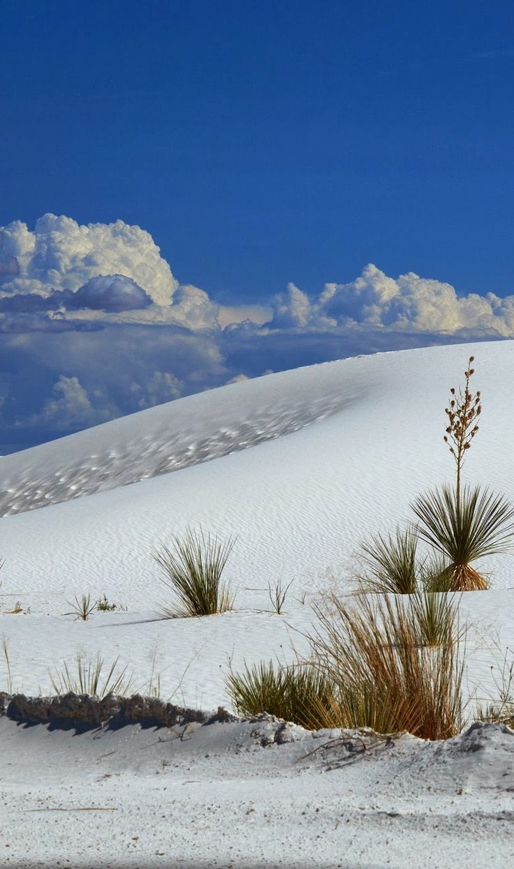 White Sands National Monument. New Mexico. | Adventure ...