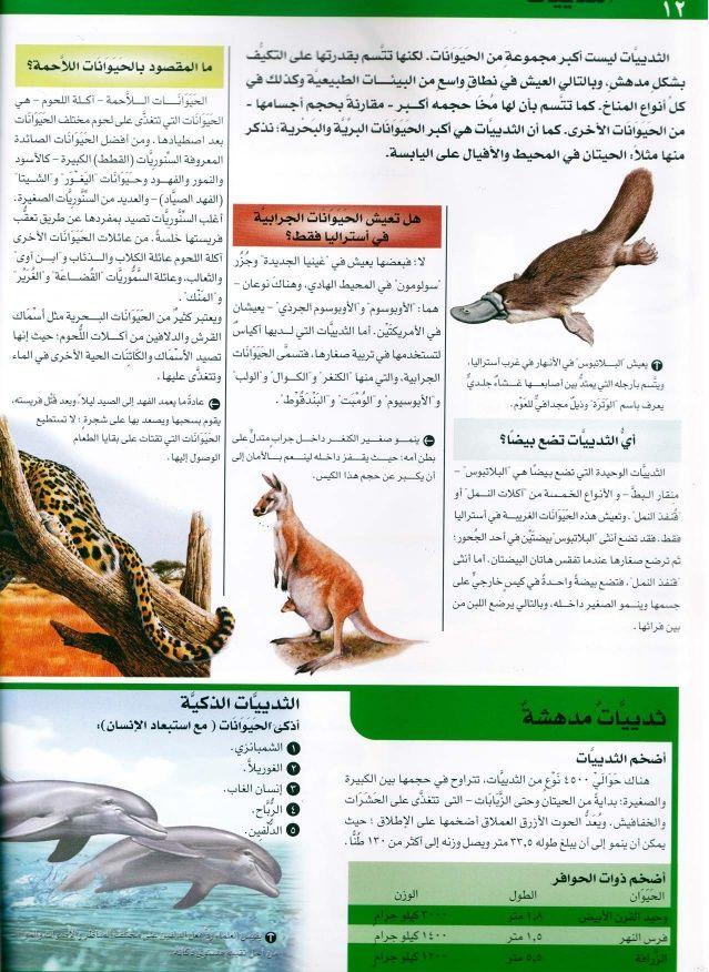 موسوعة سؤال وجواب عالم الطبيعة Animals Owl Bird