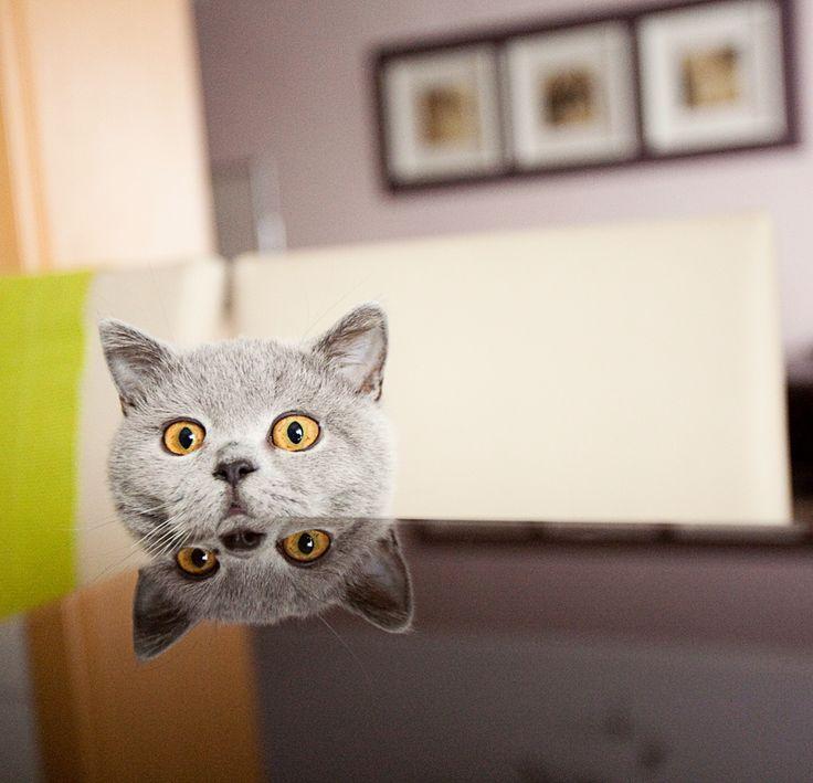 Cat... by Vladimir Propp on 500px