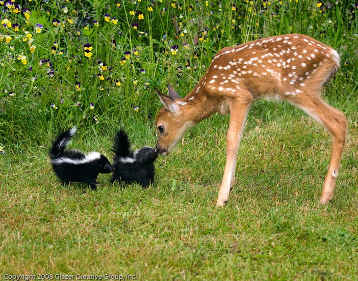 Bambi and Flower! OMG this is so freaking cute. They are nose to nose.