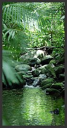 Tony's Tropical Tours - Port Douglas - Daintree Rainforest - Cape Tribulation Via Mossman Gorge