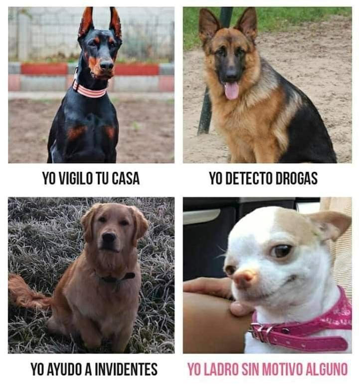 Ladrar Memes De Animales Divertidos Memes De Perros Chistosos Memes Perros