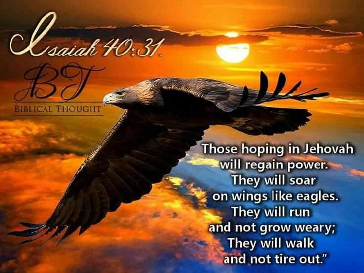 Those hoping in Jehovah will regain power. They will soar on wings like eagles. They will run and not grow weary. Hey will walk and not tire out. - Isaiah 40:31.