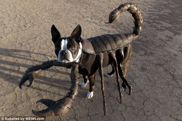 Dog scorpion costume Lost in the desert: Echo could quite easily be mistaken for a scorpion in its intricately designed costume