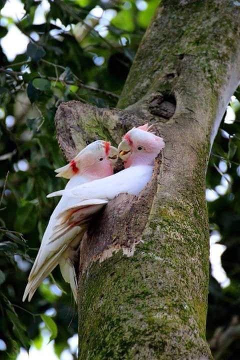 maryworker | Maryworks Relações - pássaros # birds…