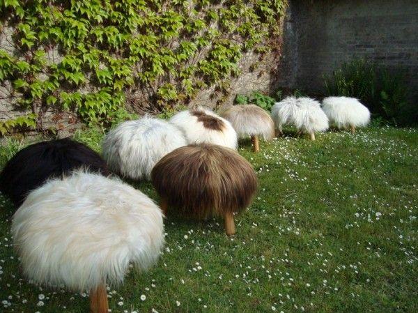 sheep stools