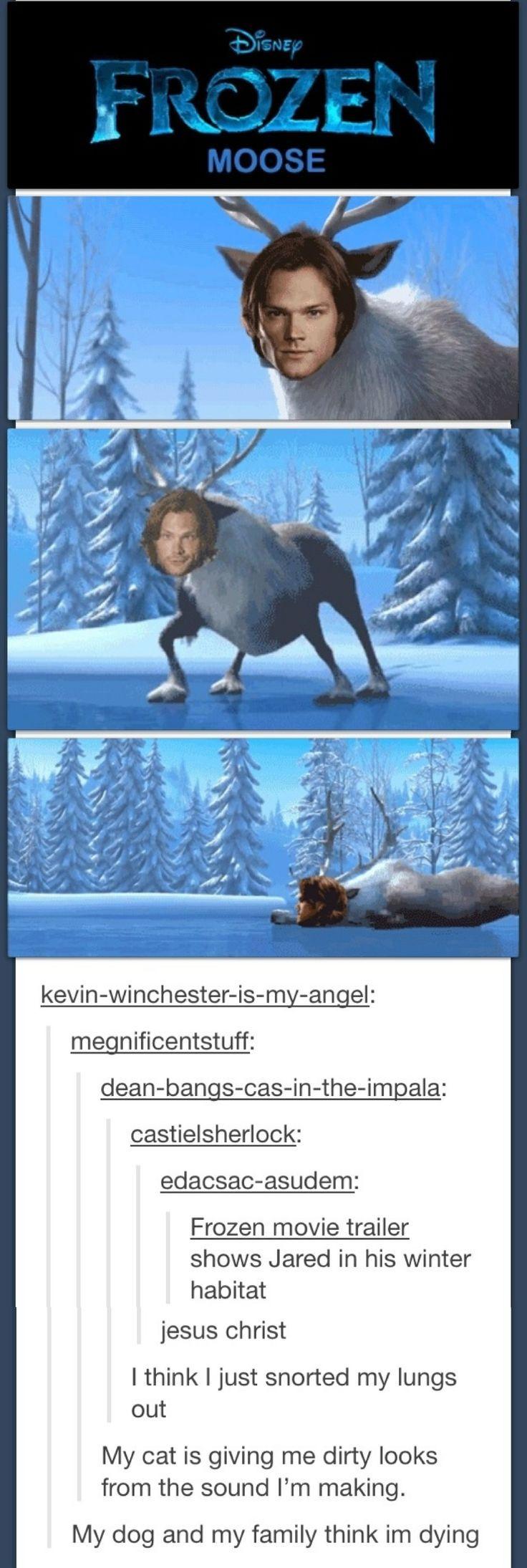Supernatural Frozen moose. Sam in his winter habitat.