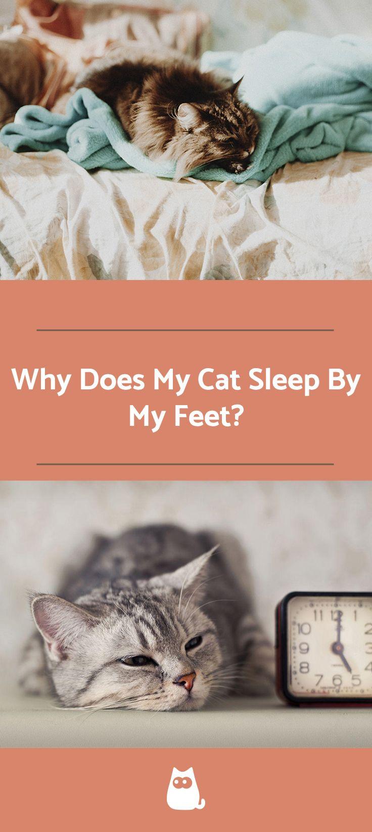 Why Does My Cat Sleep On My Feet Cat Sleeping Cat Training Cats