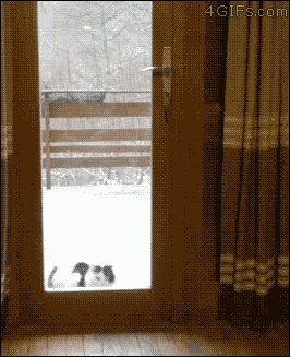 21 Best GIFs Of All Time Of The Week #155 from best GOAT and Best of the Web