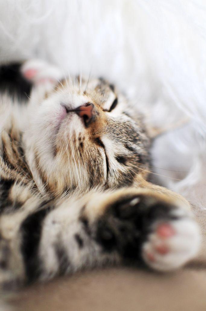 Sleeeepy little kitty