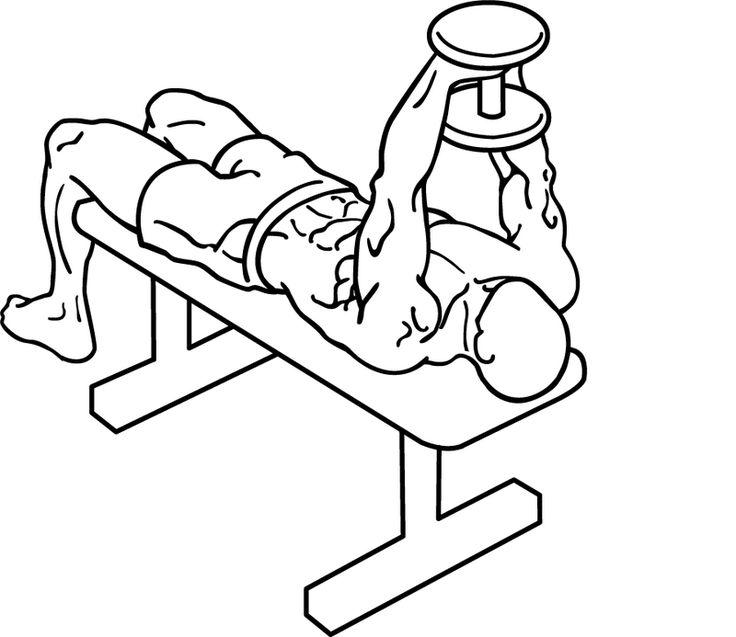 Straight-arm-pullover-1 - プルオーバー (ウエイトトレーニング) - Wikipedia