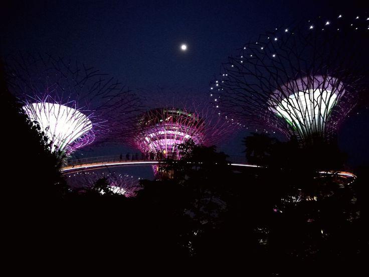 Gardens by the Bay: la tecnologia del futuro incontra la natura primordiale tra luci e colori #Attrazioni, #Foresta, #GardensByTheBay, #Giardini, #Natura, #Singapore, #Tecnologia http://viaggiare.moondo.info/gardens-by-the-bay-la-tecnologia-del-futuro-incontra-la-natura-primordiale-tra-luci-e-colori/