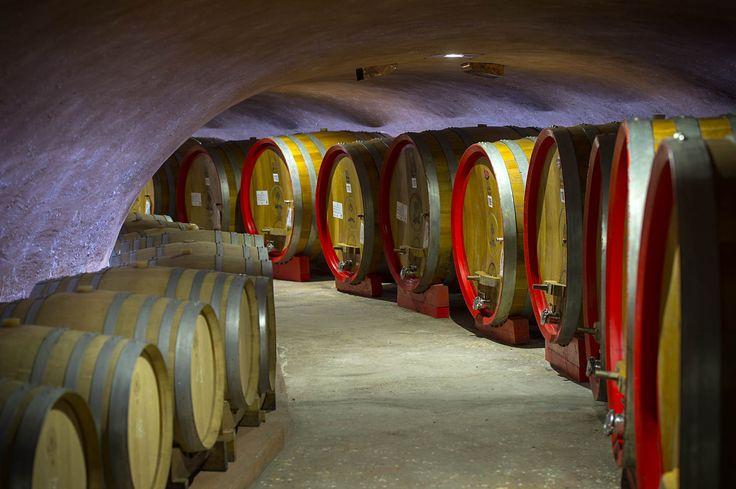 Vino dei Colli Euganei Wine of the Euganean Hills Итальянское вино Вино Эуганских Холмов Abano Terme Montegrotto Terme Padova