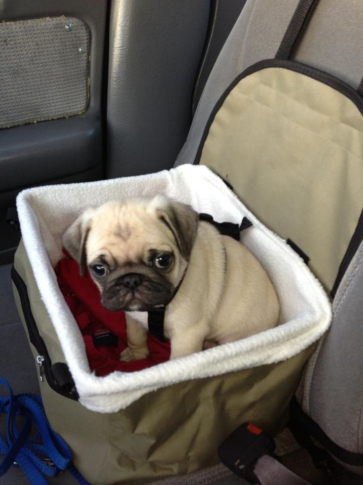 I will drive us home and love you forever!