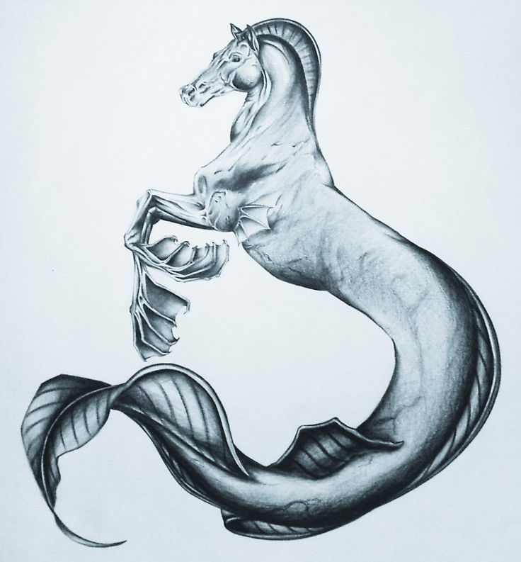 The Caballo marino chilote (chilote sea horse) is an aquatic creature of the Chilote mythology of Chile, that bears some resemblance to the hippocampus.